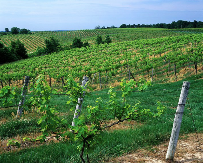 Enjoy some sips along the wine trail.