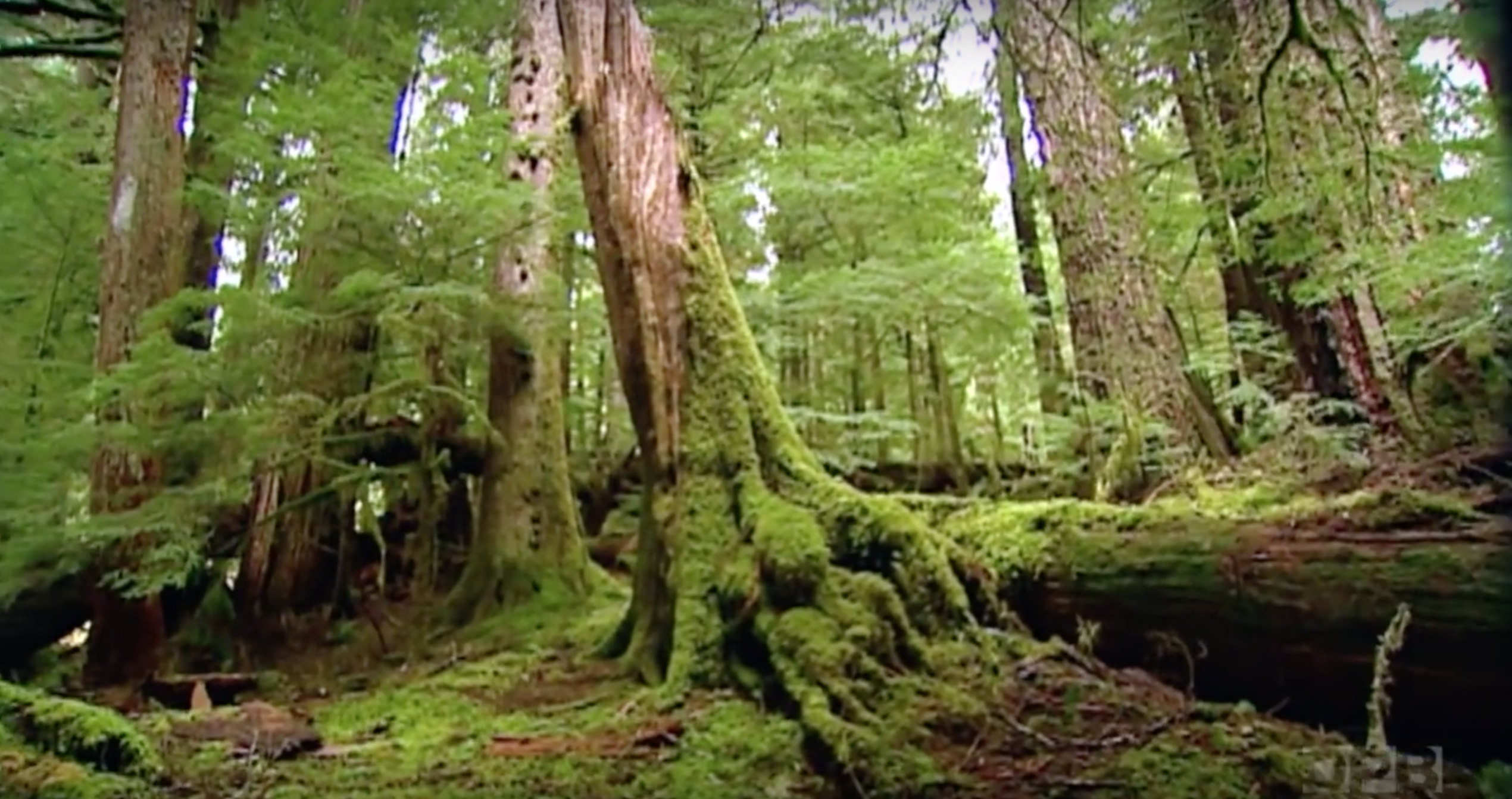 This Gorgeous 500-Year-Old Forest In Oregon Is Truly ...