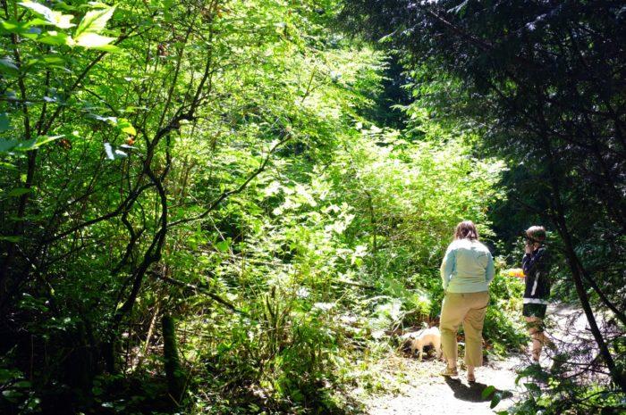 1. St. Edward's Park Trail