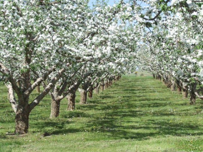 2. Swanson's Mountain View Apple Orchards