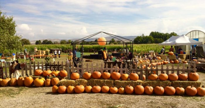 Idaho Pumpkin Patch