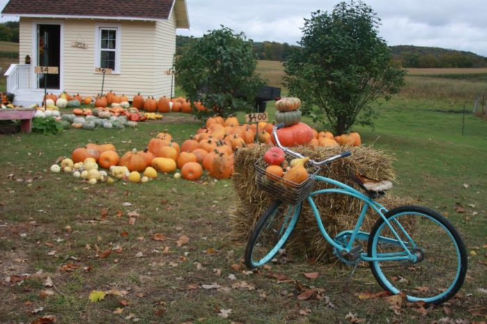 1. Thea's Pumpkin Patch, Pelican Rapids
