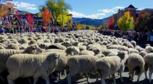 11 Unique Fall Festivals In Idaho You Won't Find Anywhere Else