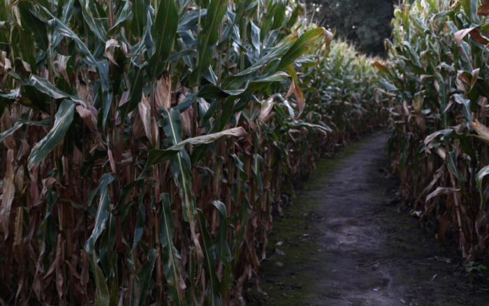 The 13 Best Corn Mazes In Idaho 2016