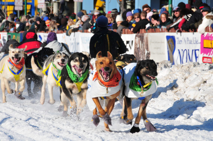 2. Watch the start of the Iditarod.