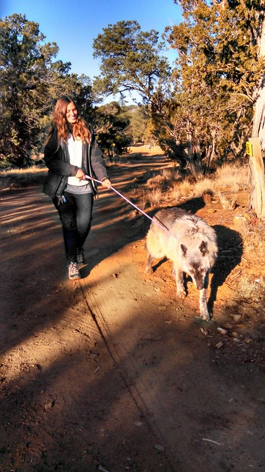 Take a 30-minute walk in the company of an ambassador wolf.