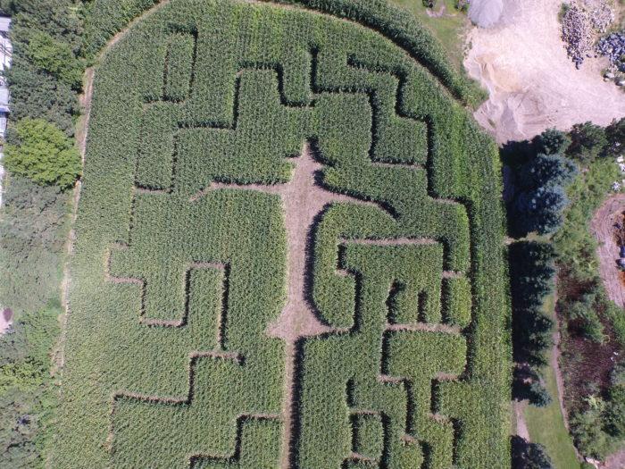 16. Zywiec's Corn Maze, Cottage Grove