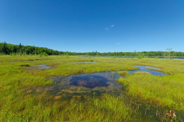 It is full of bogs, wetlands, rivers and streams.