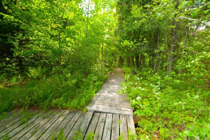 With a forest this big, hiking opportunities are essentially unlimited.