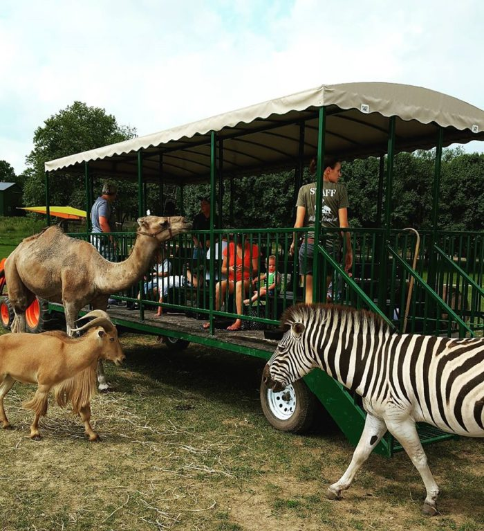 But the best part might be the wagon-tour ride, where you can actually feed the animals.