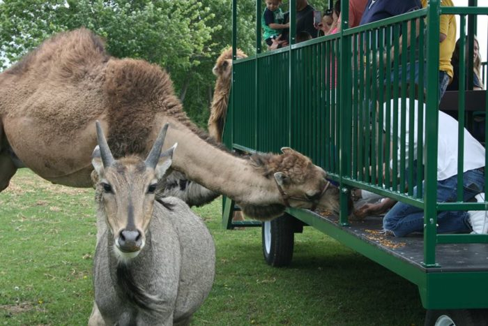 You will probably never get more up close and personal with these exotic animals than at this attraction.
