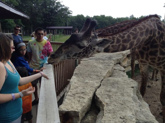 You can even get out and feed the giraffes.