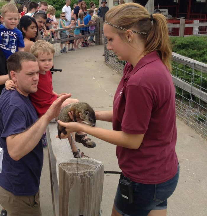 There are plenty of opportunities to interact with animals and even pet them.