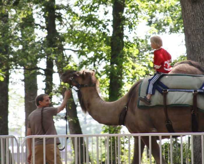 If you so desire, go on a camel ride!