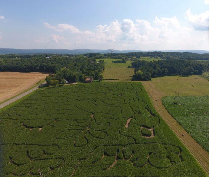 2. Leatherberry Acres Corn Maze