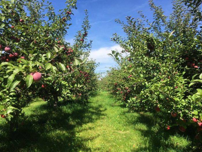 1. Door Creek Orchard