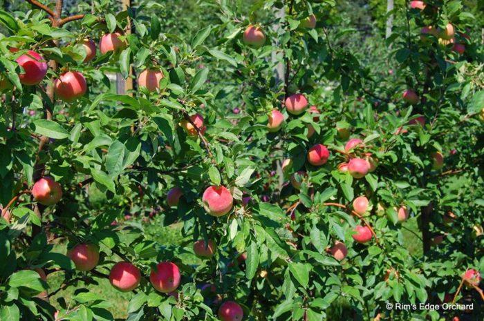 2. Rim's Edge Orchard