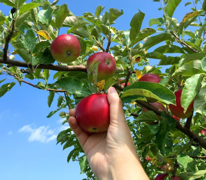 6. Star Orchard