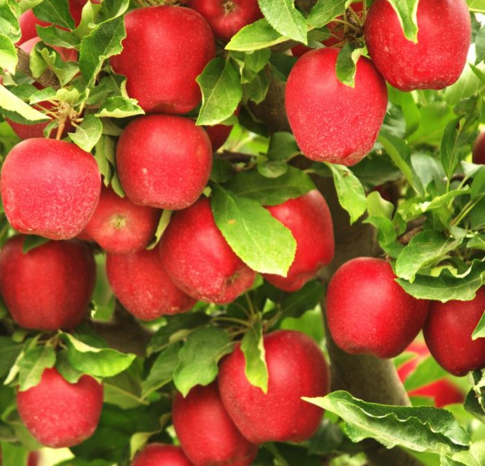 7. Sprangers Orchard