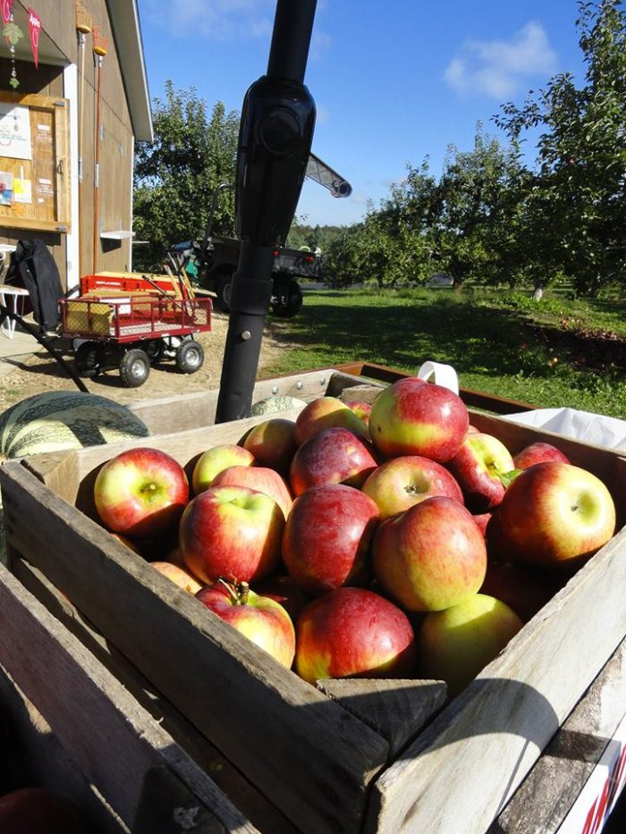 8. Starry Ridge Orchard