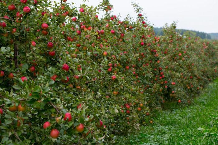 3. All Seasons Apple Orchard