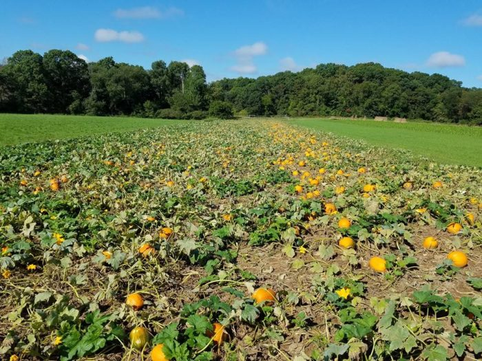 Country bumpkin pumpkin patch illinois and wisconsin
