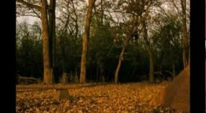 One Of The Most Haunted Forests In North America Is Right Here In Illinois