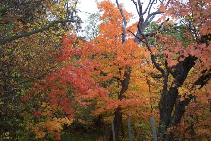 5. Matthiessen State Park