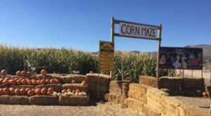 Get Lost In These 7 Awesome Corn Mazes In Nevada This Fall