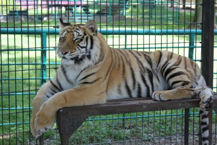 Wild Animal Safari  is a drive-thru animal park where over 70 different species of animals live.