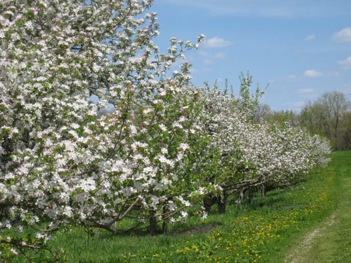7. Appleberry Orchard, Donnellson