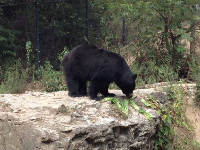 After you park and take a short hike, you'll come to Wolf Canyon where there are even more animals to admire. The park has two American Black Bears who happen to be sisters.