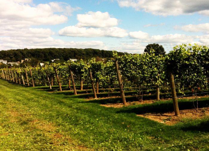 Beneduce Vineyards - 1 Jeremiah Lane, Pittstown