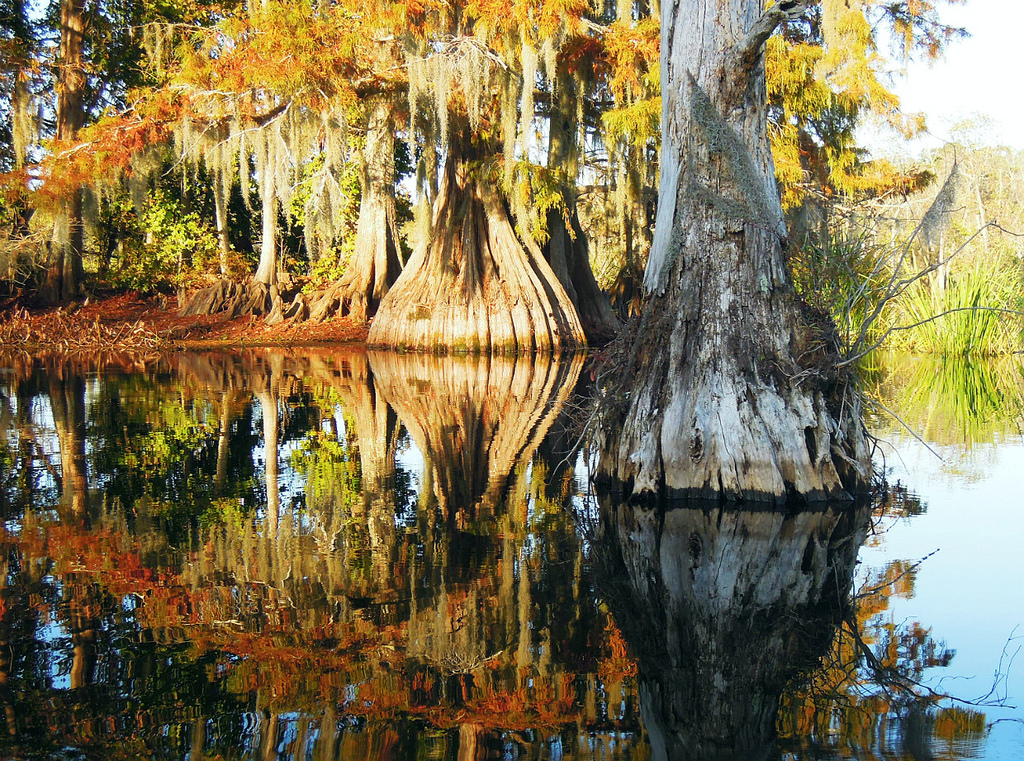 Visit Chicot State Park For The Most Beautiful Hike In