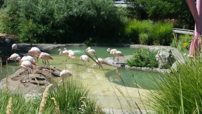 The flamingo pool is always buzzing with activity...