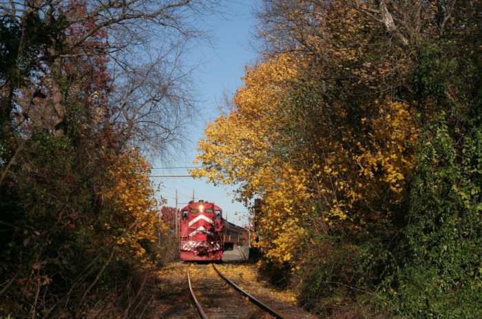 Trips last two hours in total and will take you through tree-lined passageways, alive with vibrant fall colors.
