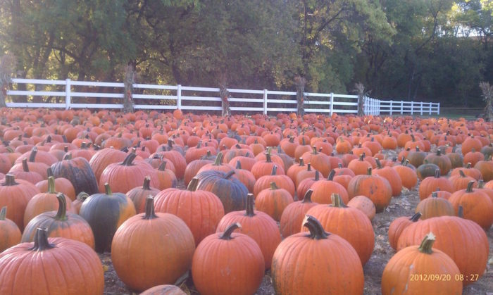 6. Buffalo River Pumpkin Patch, Glyndon