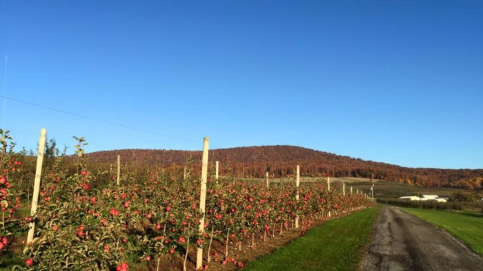 8.Catoctin Mountain Orchard - 15036 N. Franklinville Rd. Thurmont, MD.