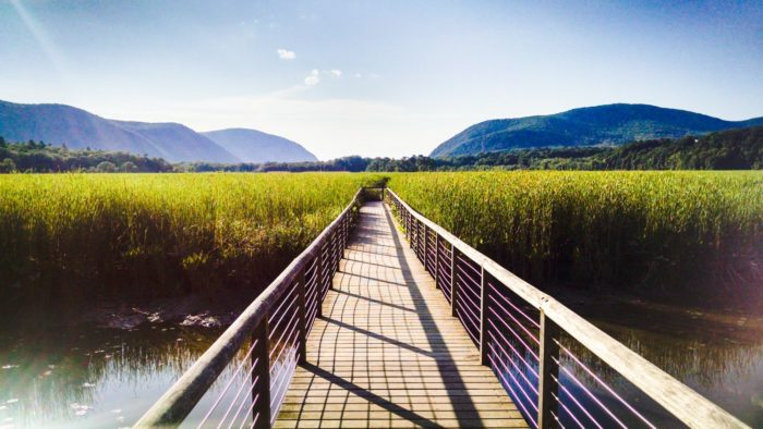 At the end of the trail you'll find what you've been hiking for, the 700-foot long boardwalk that brings you out amongst the tidal marsh.