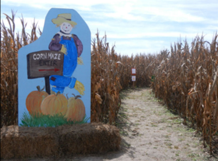4. Dargan Turf Farm Corn Maze - Darlington, SC