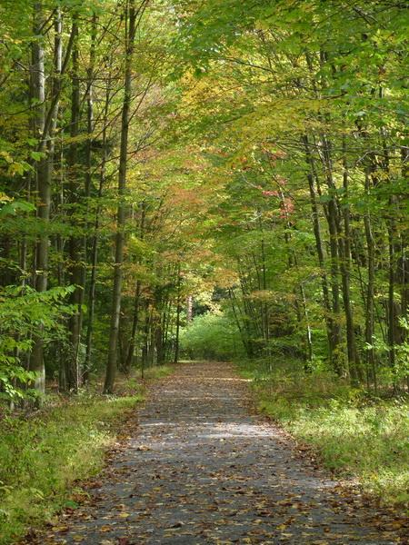 Take a peaceful walk through the forest.