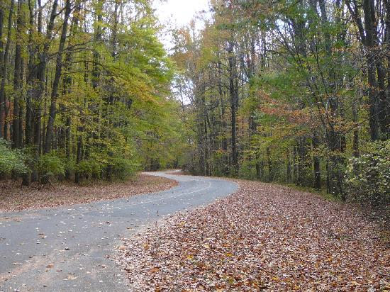 When you first arrive at Lums Pond State Park, it seems charming enough. The trees are so pretty, and the air is fresh and clean. It's the perfect spot for a night of autumn camping.
