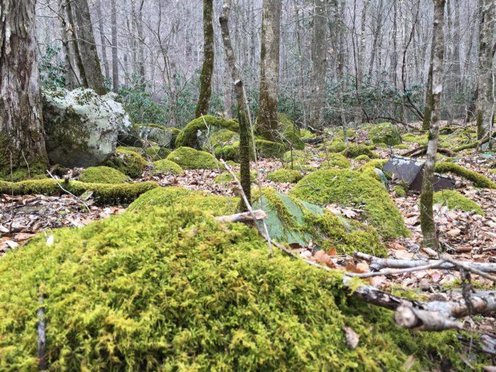 7. Glade Creek Trail