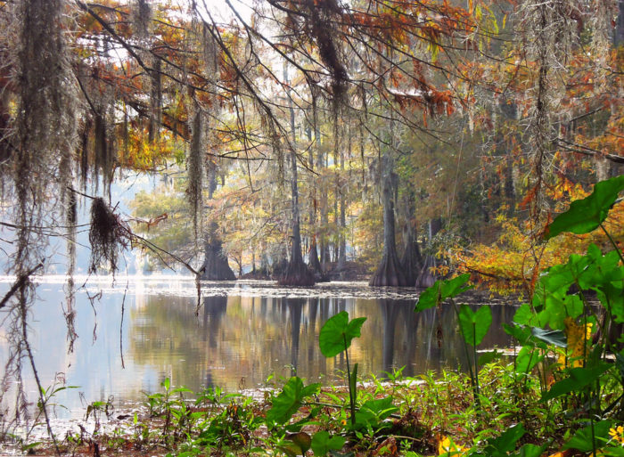 By the end of the hike, you'll be mesmerized by this swampy wonderland.
