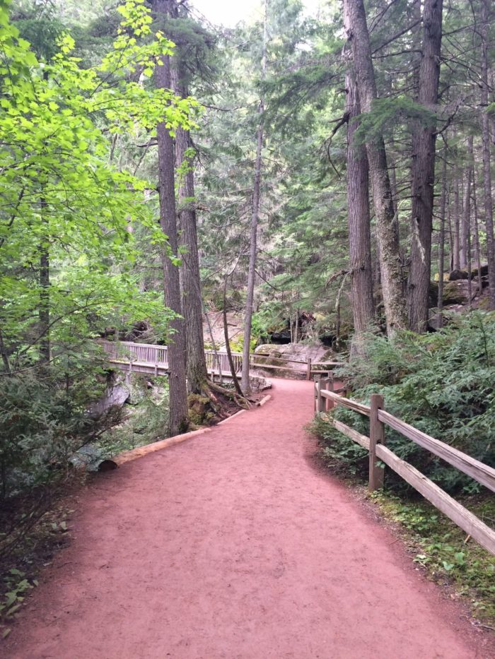 The western segment of the loop is slightly shorter, but the eastern side is much more scenic. You'll see 100 foot tall cedars and trees that are as old as 500 years.