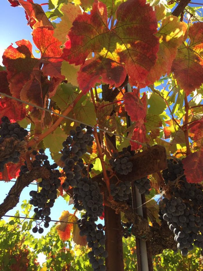 Fall. One of the most incredible seasons in Northern California. When it comes to colors this time of year--you're going to want to head up to Sonoma County.