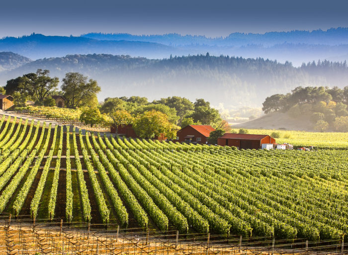 Some of the most delicious award-winning wines are made right here in our part of the state. Hundreds of wineries boast their elegant bouquets and one-stop events. You don't have to love wine to enjoy this trip. Fall is the reason to be here.