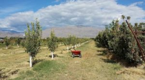 These Charming 5 Apple Orchards In Nevada Are Picture Perfect For A Fall Day