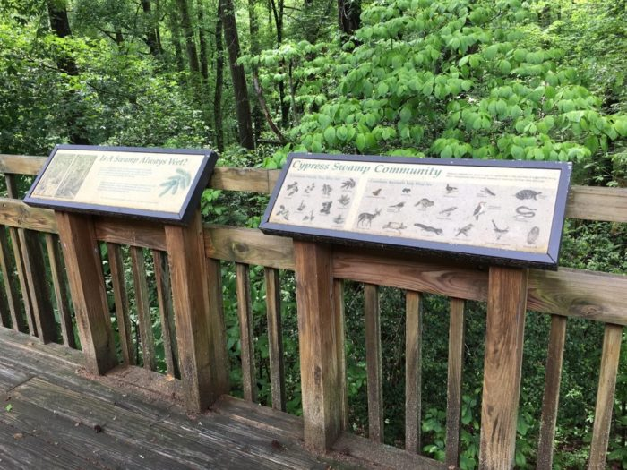 Walk the quarter-mile boardwalk trail while learning about the protected wildlife along the way.