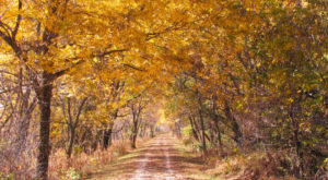 10 Easy Hikes To Add To Your Outdoor Bucket List In Iowa